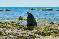 Joint mignon de bébé au-dessus de roche de plage de littoral images libres de droits