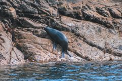 Joint sur des roches au bruit douteux - parc national de Fiordland, île du sud, Nouvelle-Zélande image libre de droits