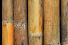 Jointed bamboo Stock Image