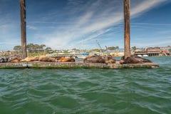 Joints au port de baie de Morro, littoral de la Californie photos stock