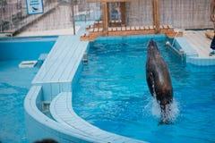Joints dans la piscine, sauts drôles dans l'eau photographie stock