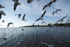 Joints de marine images libres de droits
