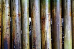 Joints en bambou rôtis par riz visqueux Image stock