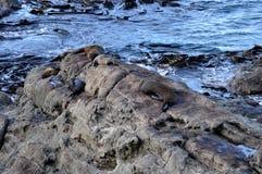 Joints sur des roches dans Kaikoura, Nouvelle-Zélande Image libre de droits