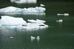 Joints sur les icebergs de glace chez Tracy Arm Fjord Image stock
