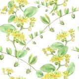 Jojoba - fiori e frutti Fondo senza cuciture Fotografia Stock
