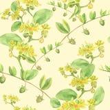 Jojoba - fleurs et fruits branchements Photographie stock libre de droits