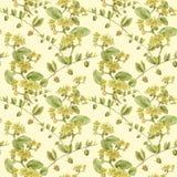 Jojoba - fleurs et fruits branchements Fond sans couture Photos stock