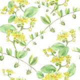 Jojoba - fleurs et fruits Fond sans couture Photographie stock
