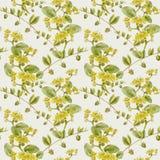 Jojoba - fleurs et fruits Fond sans couture Image stock