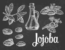 Jojoba fruit met glaskruik Hand getrokken vectorwijnoogst gegraveerde illustratie Stock Afbeelding