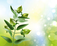 Jojoba on nature background Stock Photography