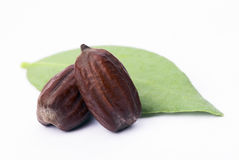 Jojoba (Simmondsia chinensis) leaves and seeds Stock Photo