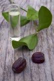 Jojoba (Simmondsia chinensis) leaves, seeds and oil Stock Photo