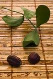 Jojoba (Simmondsia chinensis) leaves and seeds Royalty Free Stock Photos