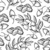 Jojoba vector naadloze patroontekening uitstekende achtergrond met bes, noten, tak Stock Afbeeldingen