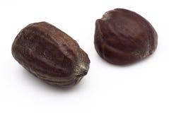 Jojoba zaden (chinensis Simmondsia) Stock Afbeeldingen