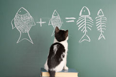 Joke. About a cat studying arithmetic Royalty Free Stock Image