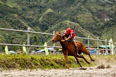 The Jokey. A jockey was spurring his horse in a traditional horse race held in Gayo highland, Takengon, Aceh, Indonesia Royalty Free Stock Photos