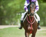 Jokey on a racing horse before start Stock Image