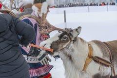 Jokkmokk vintermarknad 2019, en Sami händelse, Norrbotten, Sverige, loppet arkivbild