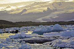 Jokulsarlon at daybreak. Blue icebergs in lagoon with glacier in background under golden light at sunrise royalty free stock images