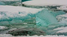 Jokulsarlon Glacier Lagoon. Icebergs on the shore in Iceland stock video footage
