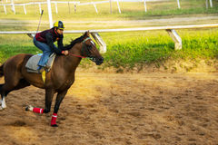 Joky ride horse in the sport Stock Photo