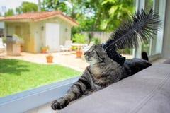 Joli chat Photo libre de droits