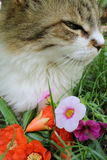 Joli chat Image libre de droits