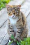 Joli chat ou chaton, se reposant sur des conseils Image libre de droits