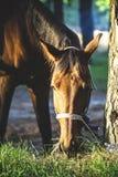 Joli cheval Image libre de droits