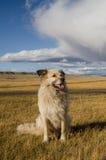 Joli chien hirsute sans abri dans la steppe dans l'Altai dans la somme Images stock