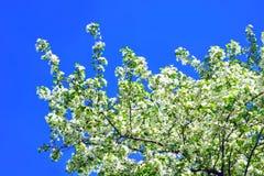 Joli fond de source Fleur d'Apple Photos libres de droits