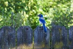 Joli oiseau bleu Images stock