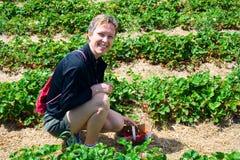 Joli strawberr de cueillette de femme Photographie stock libre de droits