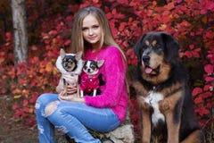 Jolie fille avec deux chiens et mastiff de chiwawa Images libres de droits