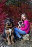 Jolie fille avec deux chiens et mastiff de chiwawa Image stock