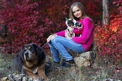 Jolie fille avec deux chiens et mastiff de chiwawa Photos stock