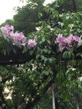 Jolie fleur blanche rosâtre Photo libre de droits