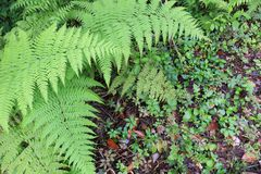 Jolie fougère avec la végétation verte ci-dessous photo stock