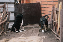 Jolie séance du chiot deux Photographie stock libre de droits