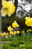 Jolies fleurs Photos libres de droits