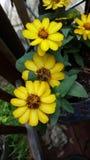 Jolies fleurs aléatoires images stock