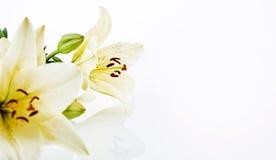 Jolies fleurs avec l'espace de copie Images libres de droits