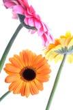 Jolies fleurs de jardin sur le blanc photos stock