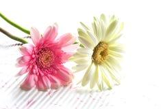 Jolies fleurs en été Photo stock