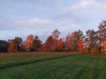 Jolis arbres Photos libres de droits