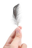 Jolly feather. Isolate on white background Stock Image