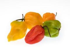 Jolokia de poivres-Bhut de Ghost images libres de droits